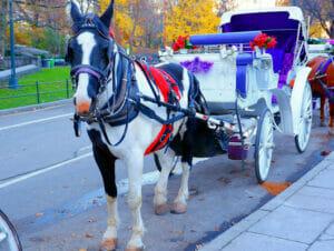 Tour en calèche dans Central Park