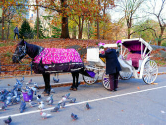 Tour en caleche a New York a Central Park