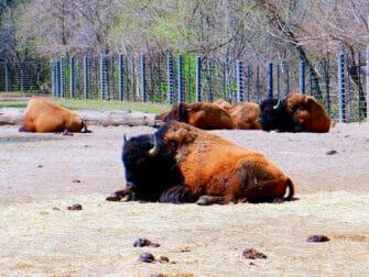 The Bronx Zoo a New York Animals en train de se relaxer