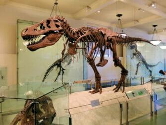 Musée d'Histoire Naturelle à New York T Rex