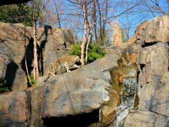 Billets pour le Central Park Zoo - Léopard