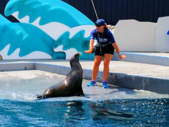 New York Aquarium - lion de mer